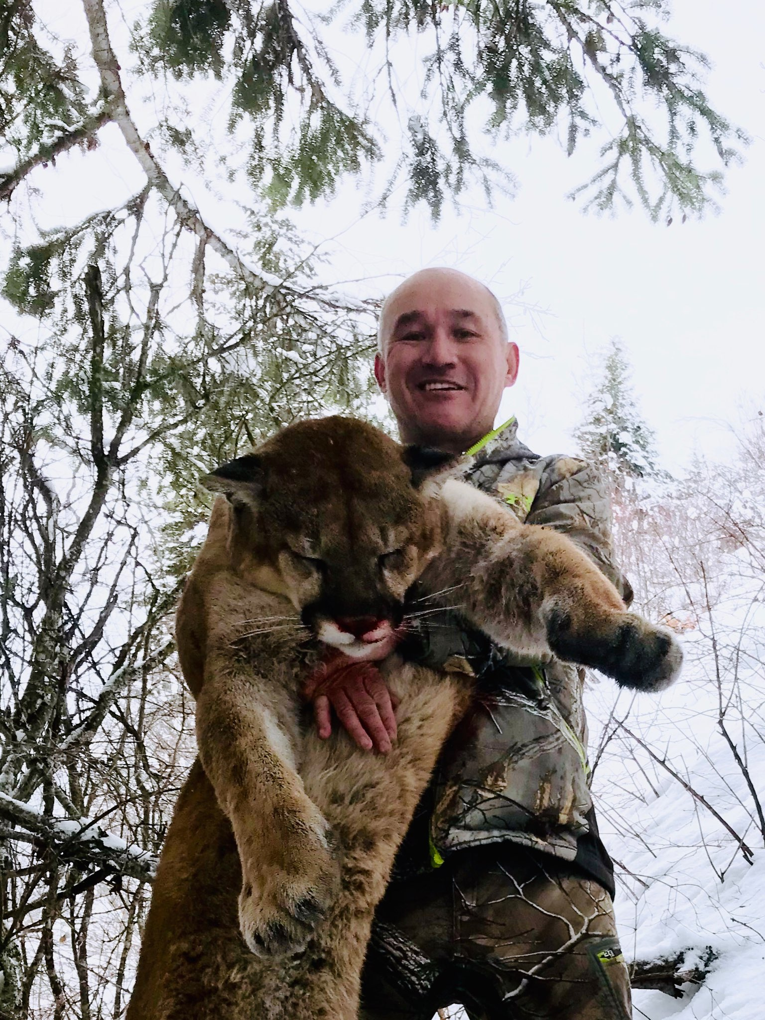 A man in a forest during winter holding a mountain lion he harvested during a hunt with Bungalow Outfitters