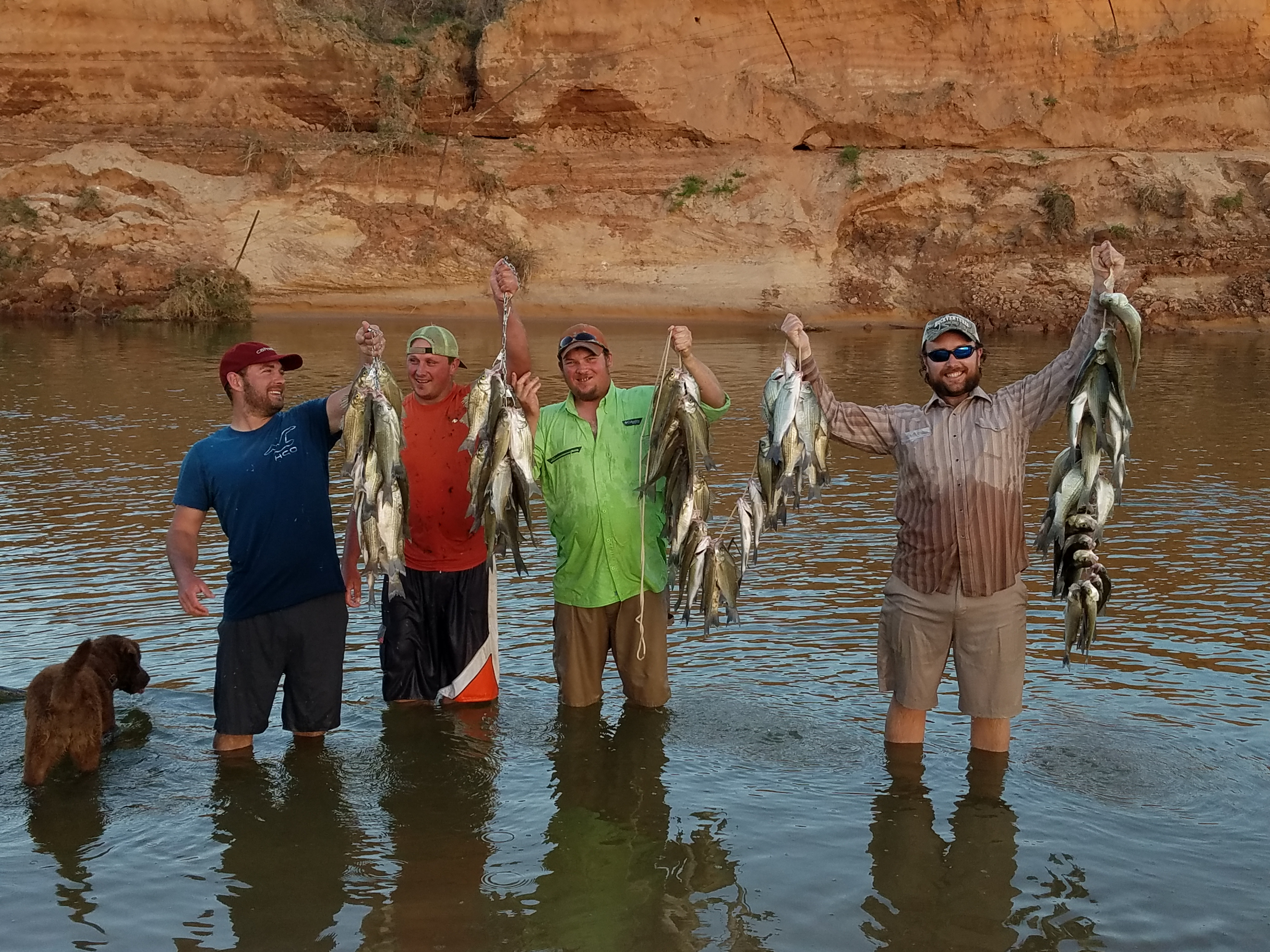 A group of four men standing knee deep in water each holding a stringer full of fish