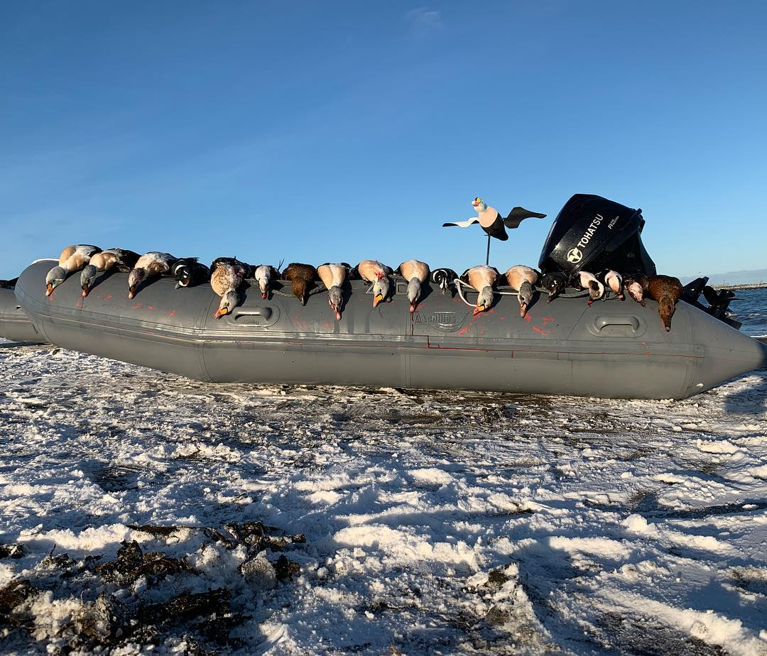 king eider adventures waterfowl hunting in alaska