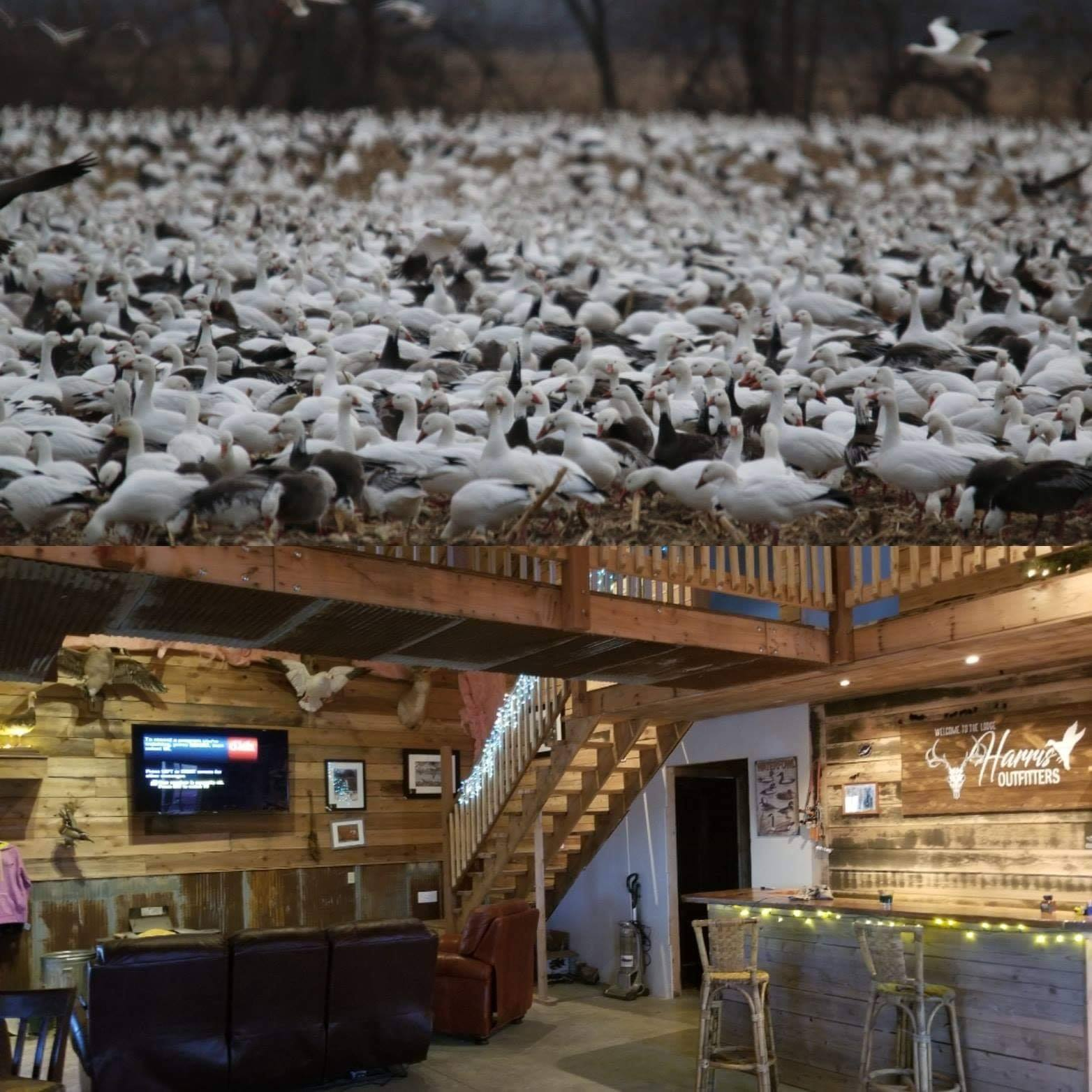 harris outfitters hunting lodge and snowgoose conservation hunt