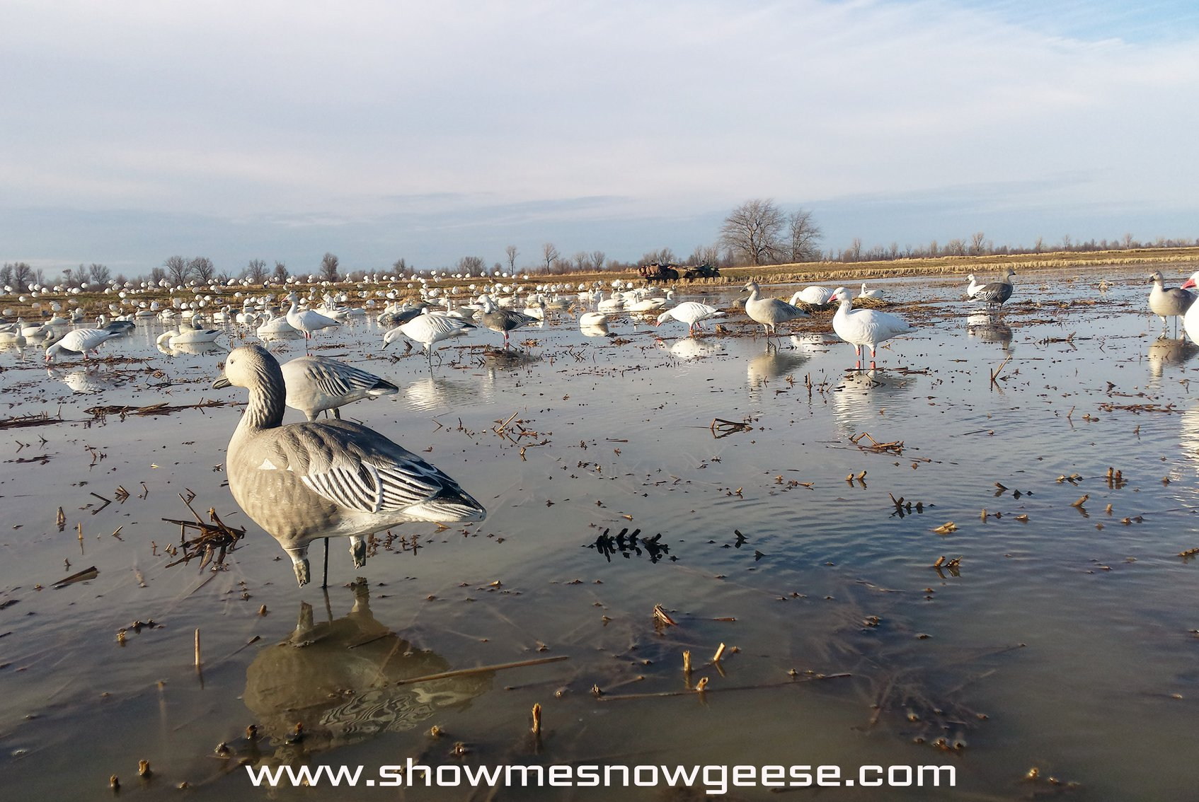 show-me-snow-geese-1562467001606271318