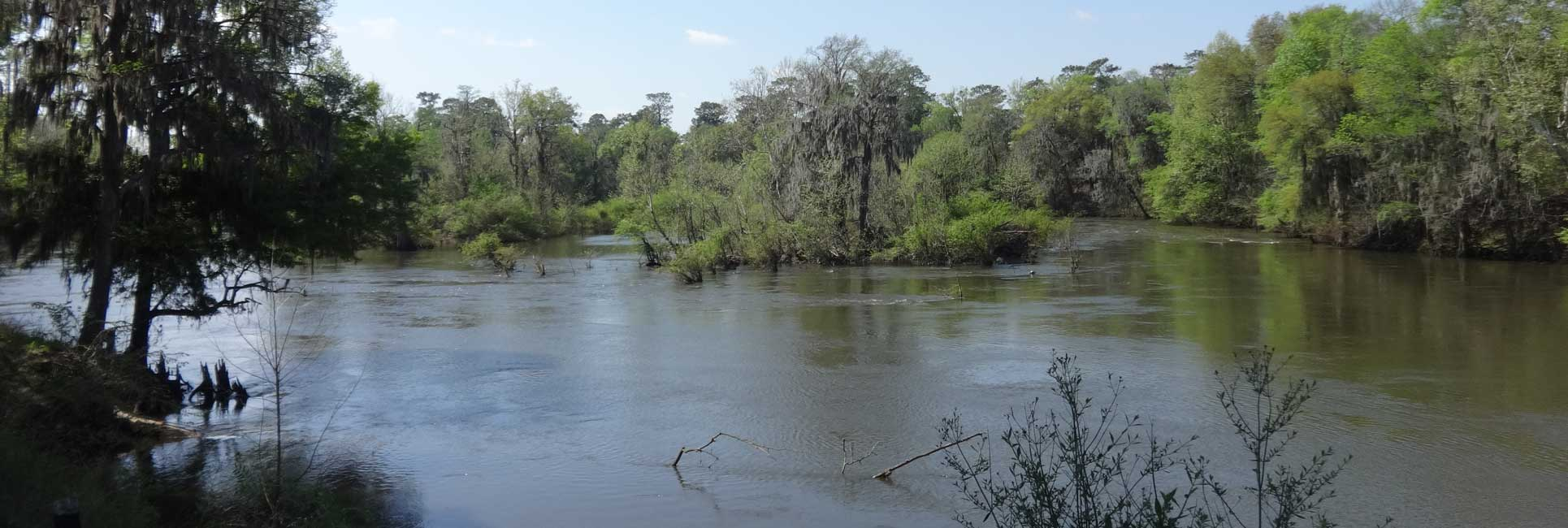 A view of water flowing through the trees on Flint River in Albany, GA.