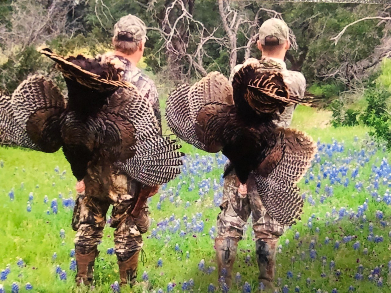 texas-spring-turkey-hunt-15482626681854040028