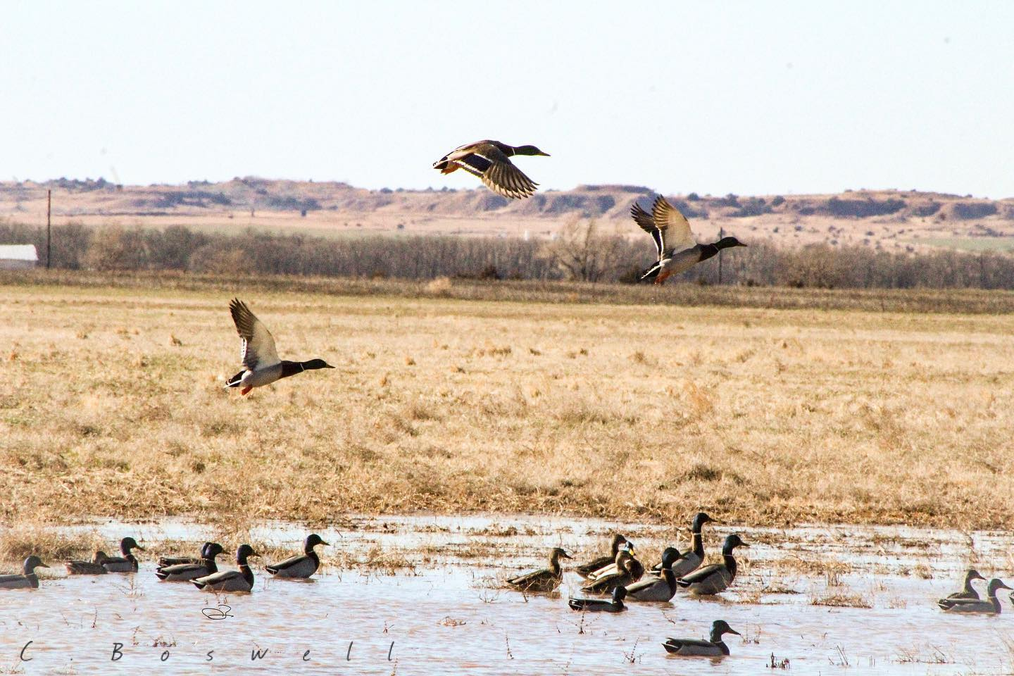water-sheds-or-dry-field-duck-hunt-1556762640876377601