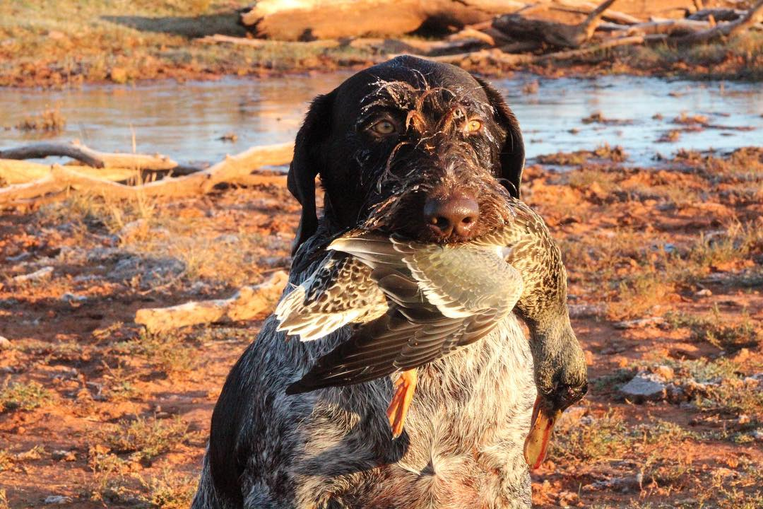 water-sheds-or-dry-field-duck-hunt-15567627271200895445