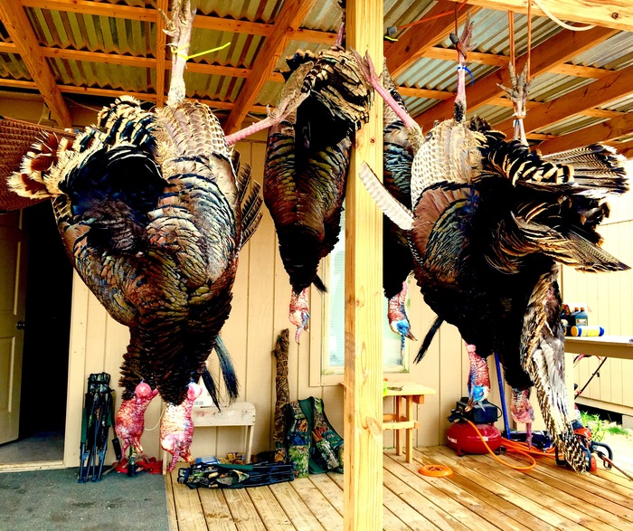 texas-rio-turkey-hunts-unguided--15570047521092201001