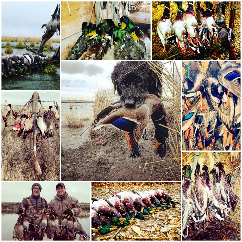 no-hassle-goose-duck-hunt-1557157854594181007