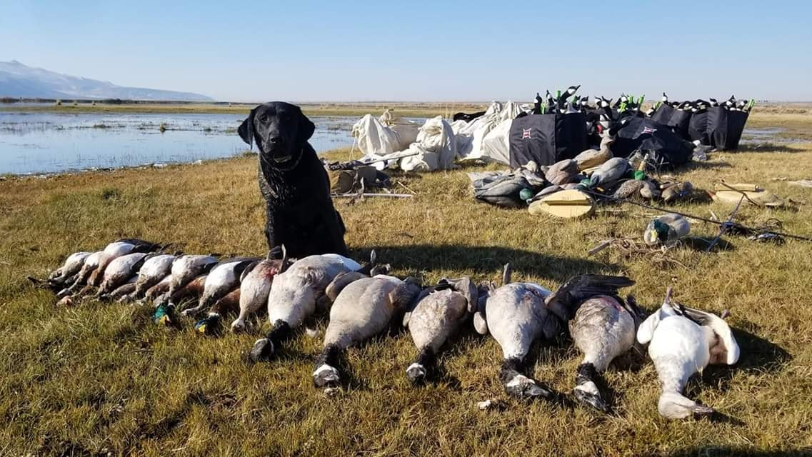 2-shooters-goose-hunt-15571607001594700623