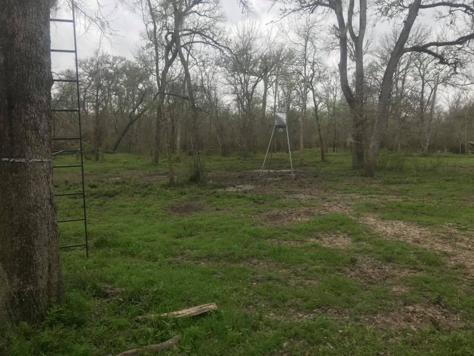 central-texas-hog-hunt--1557892687921429540