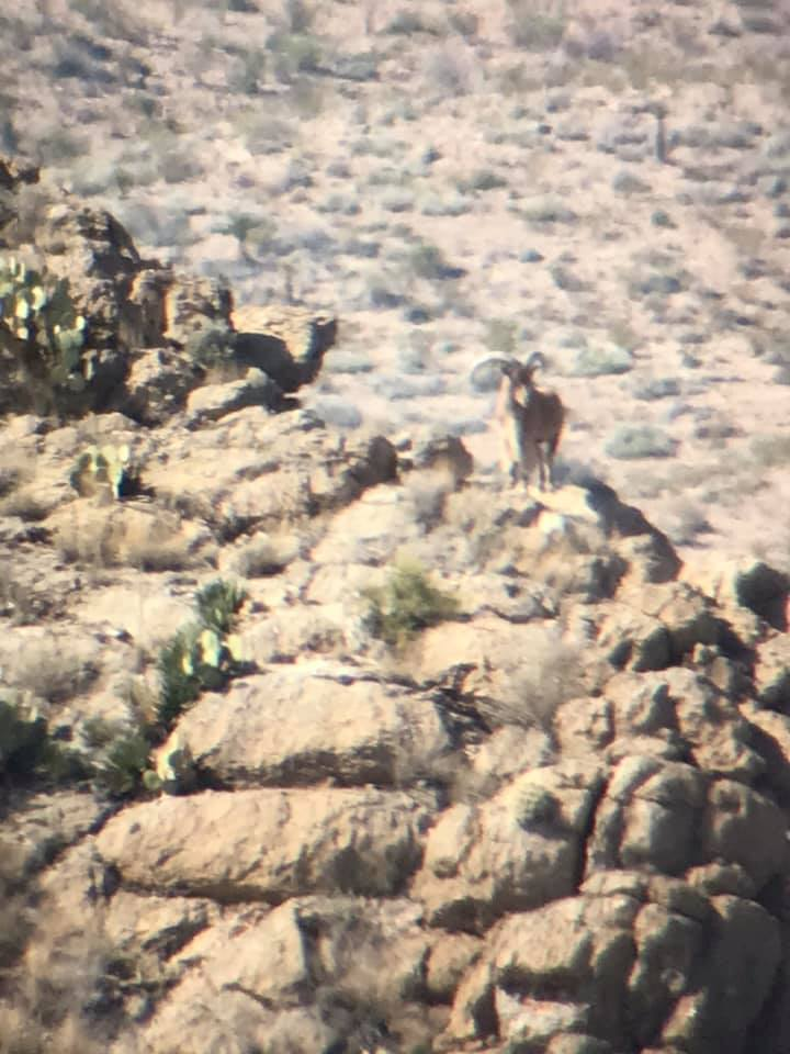 group-hunt-for-aoudad-15579513311811280137