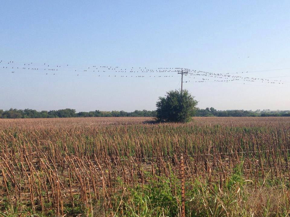 opening-weekend-dove-hunt-and-bbq-15580678001330922846