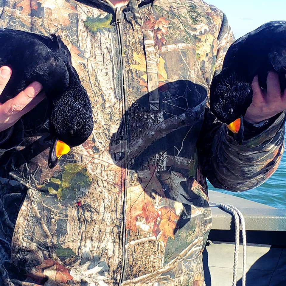 maine-sea-duck-hunting-with-lodging-15581420721492536168
