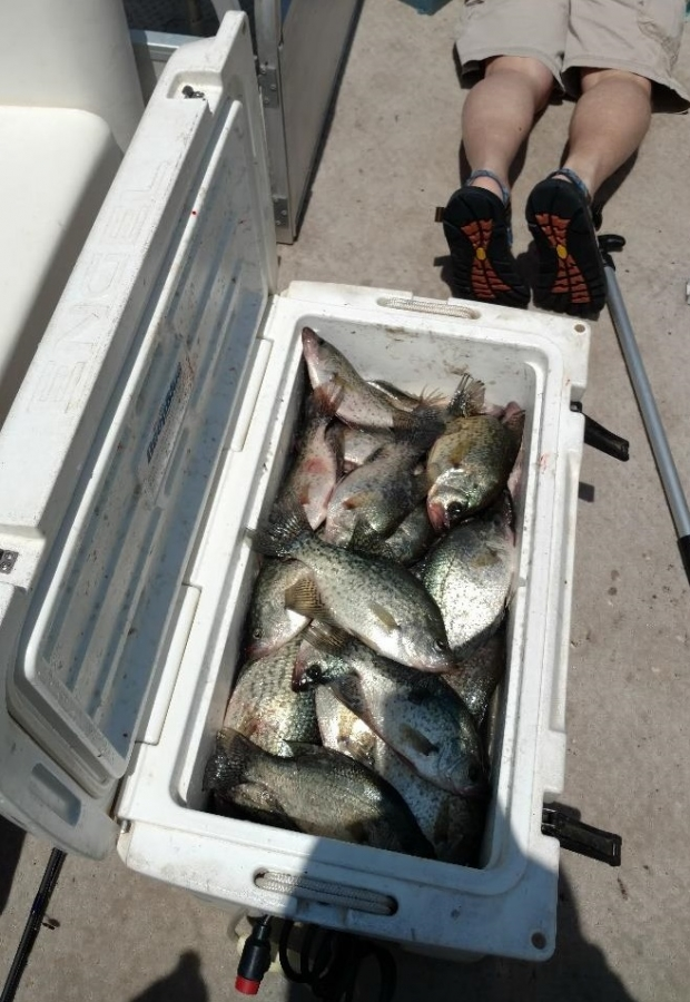 full-day-of-crappie-1558497769455631139