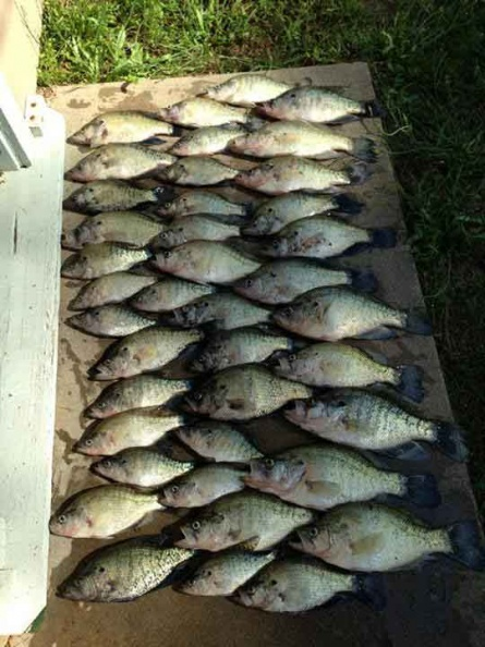 tennessee-fishing-1559416350674206618