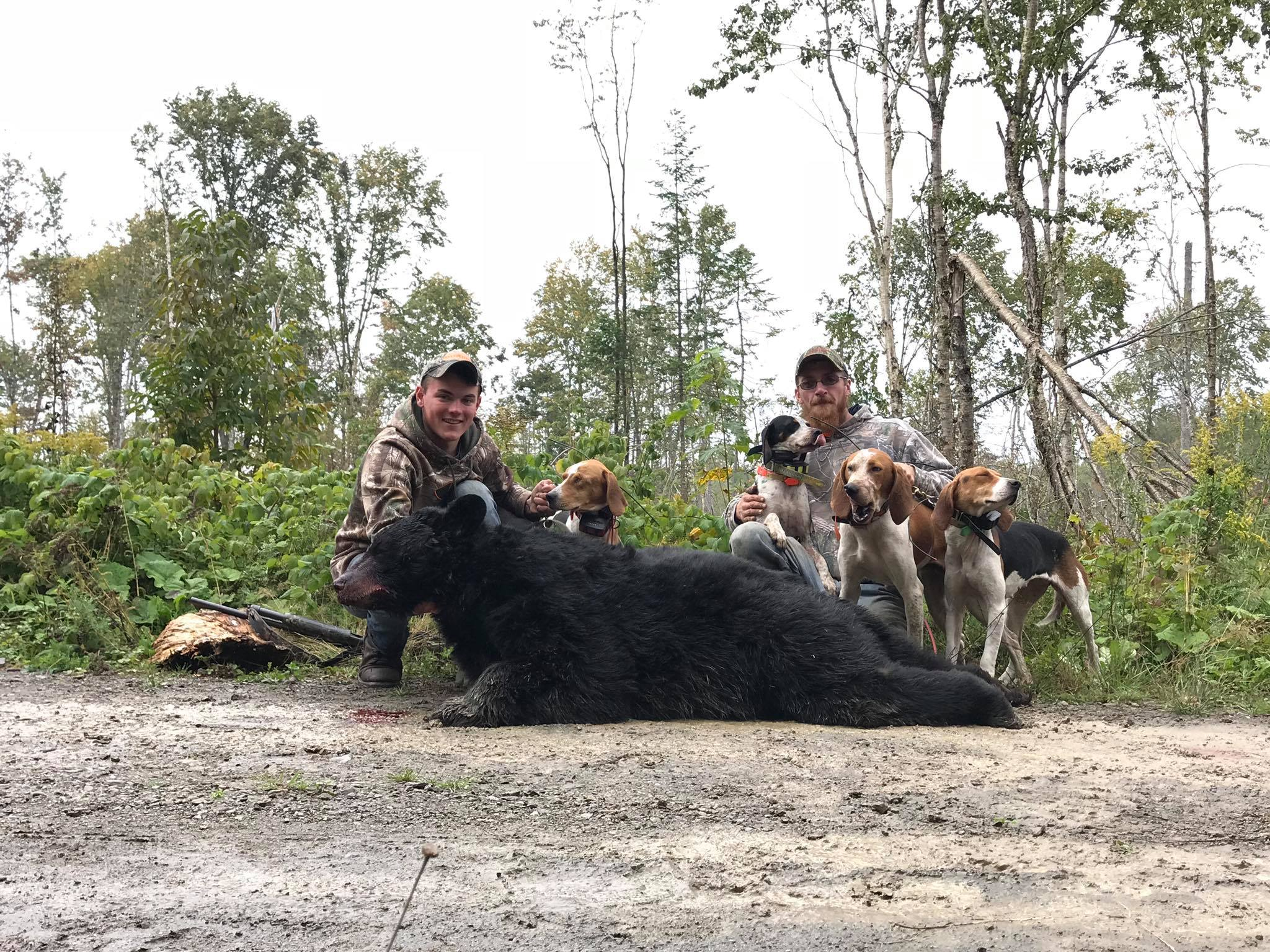 bear-hunt-with-hounds-15606214652117524538
