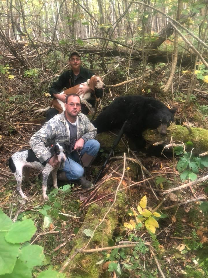 bear-hunt-with-hounds-1560621705684287980