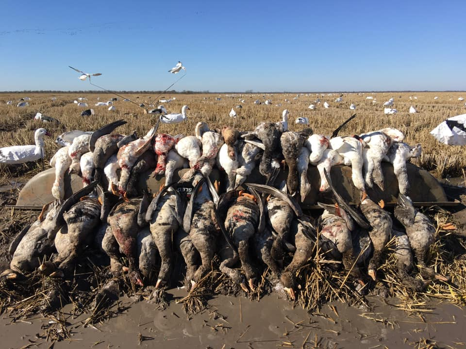 bay-city-goose-hunt-15648816301561567579