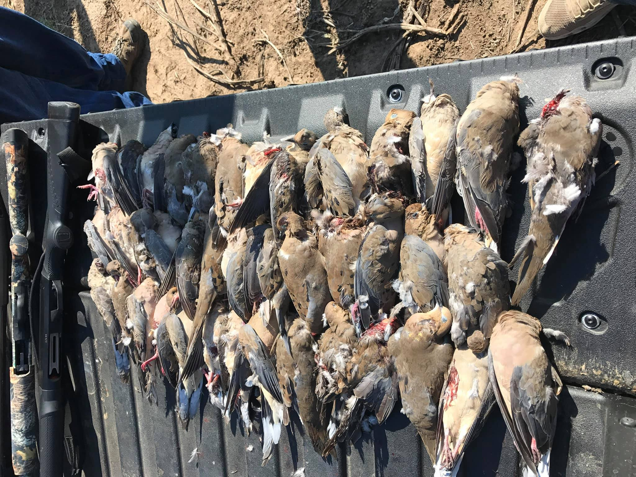 dove-hunt-in-cleburne-tx-15648900641777002899