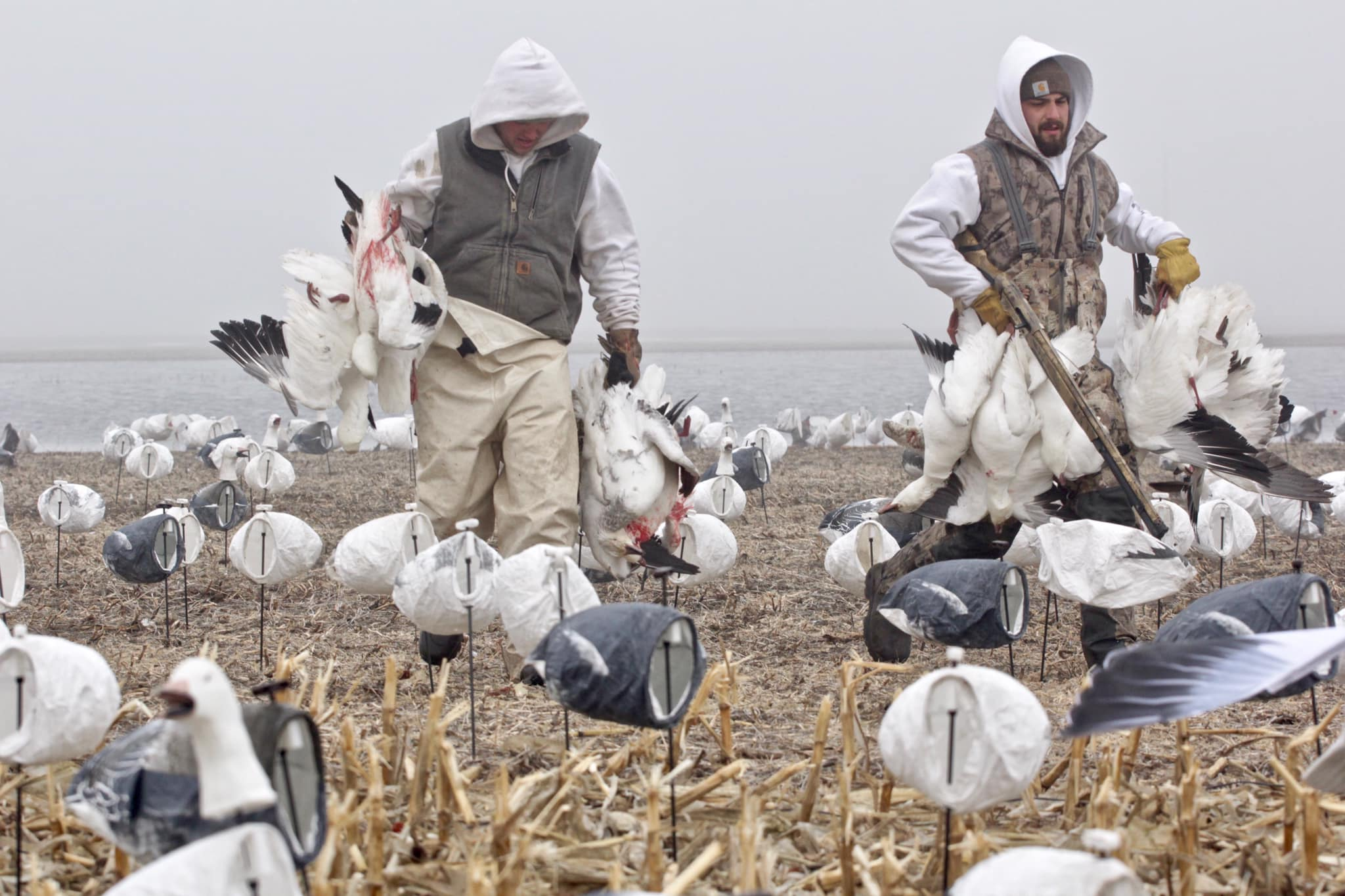 spring-goose-hunt-small-group-1565206559651187380
