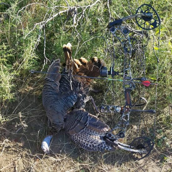 turkey-hunts--15652300261151443324