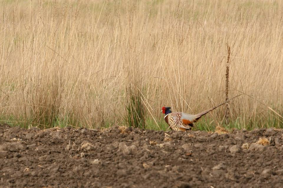 guided-upland-bird-hunt-1565315727160407595
