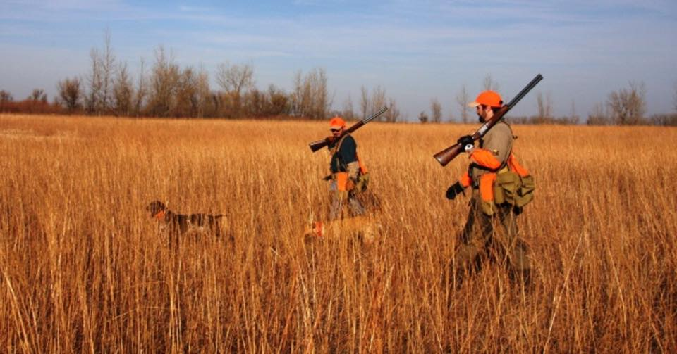guided-upland-bird-hunt-156531573329646428