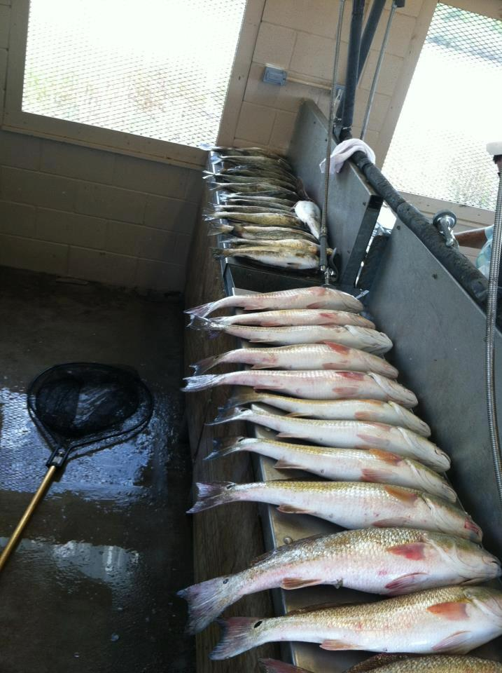 bay-fishing-half-day-1565459164697689876