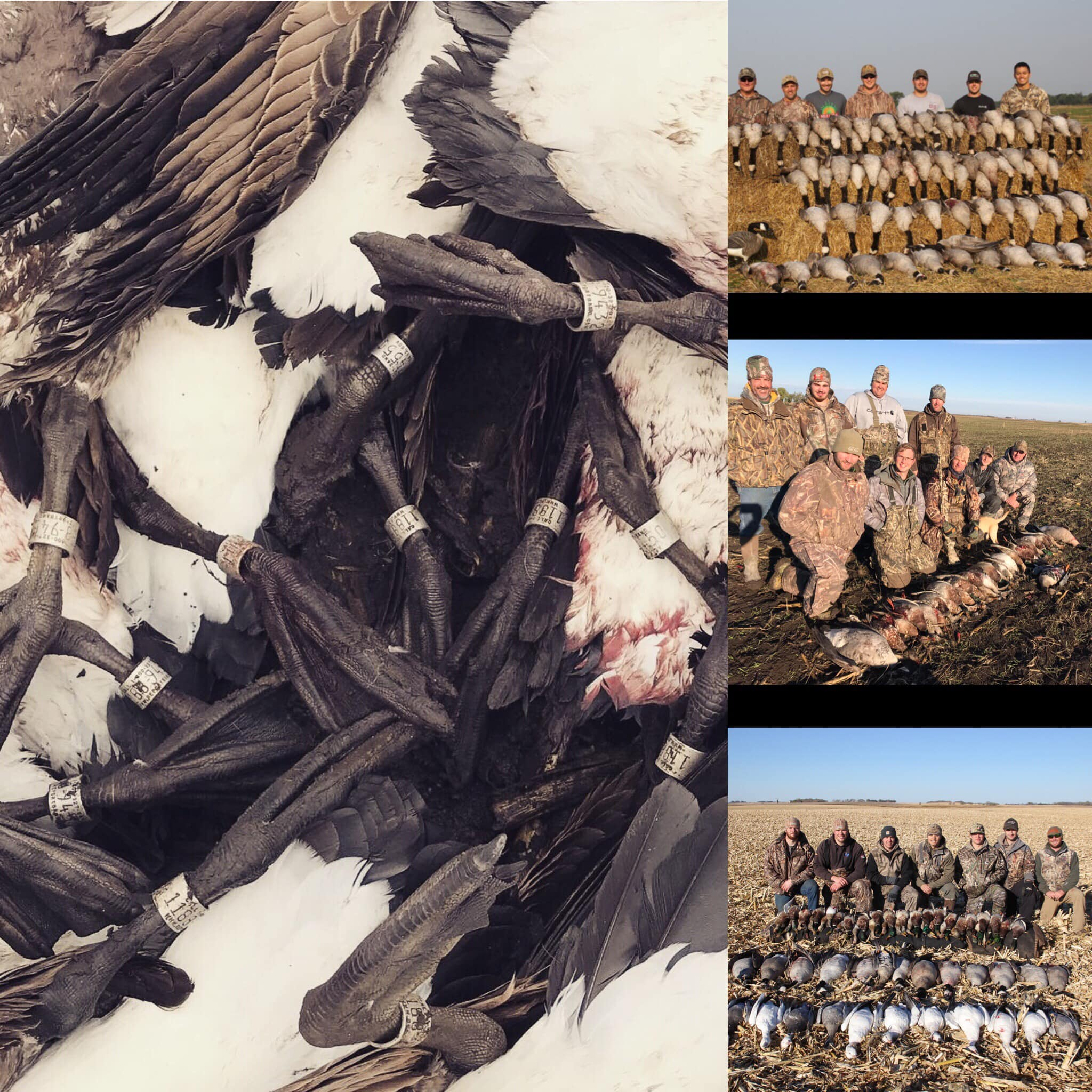 duckgoose-combo-hunt-large-group-15664925651972504830