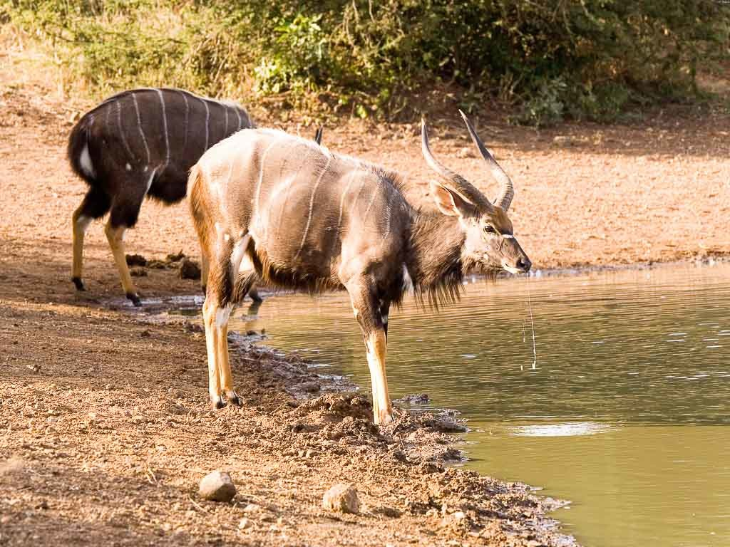 nyala-weekend-hunt-15693585901284428253