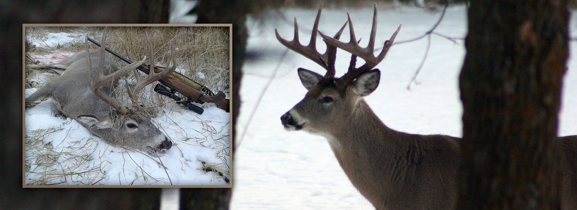 clearwater-county-whitetail-hunts--1597077601858162140
