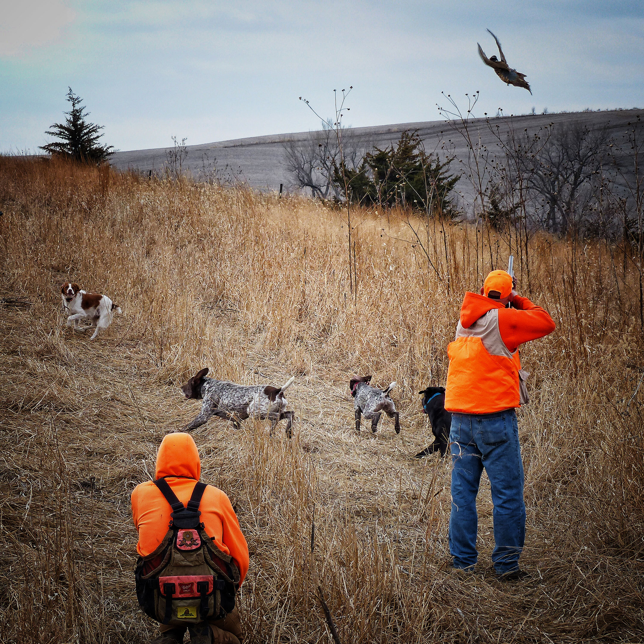 1-12-day-2night-unlimited-pheasant-hunt-16103984861515808893
