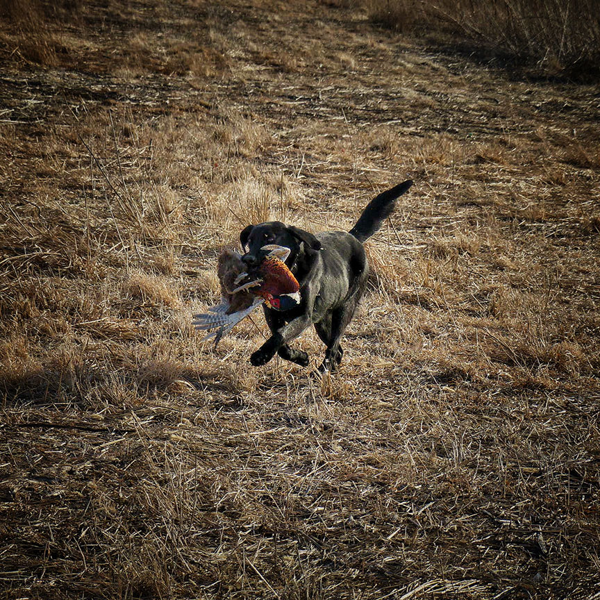 1-12-day-2night-unlimited-pheasant-hunt-1610398835220457385
