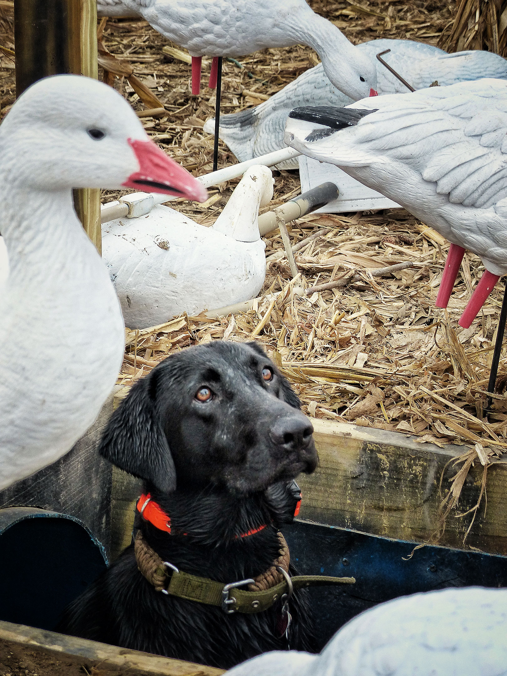 1-12-day-2-night-waterfowl-hunt-1610638033406736315