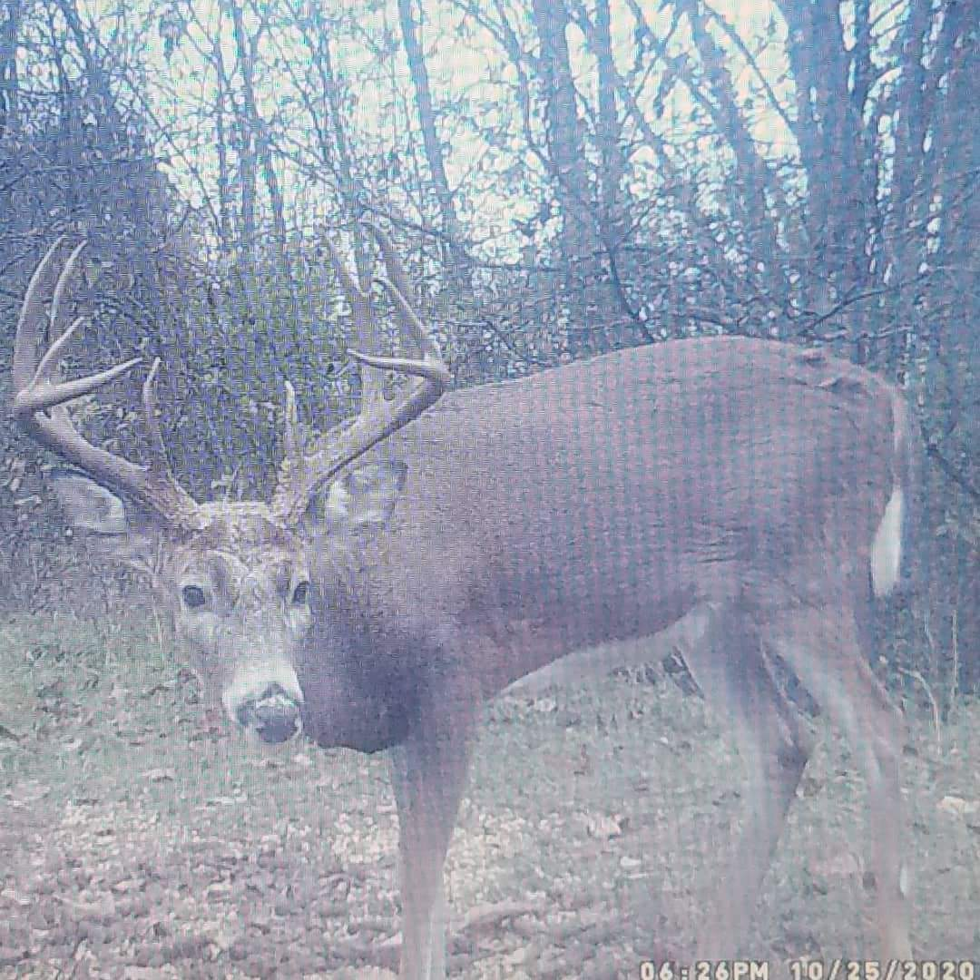 ohio-trophy-whitetail-hunts--16190543652067032964