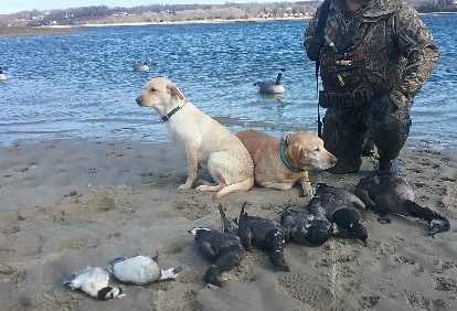 long-island-ny-waterfowl-hunt-13935037701548709556