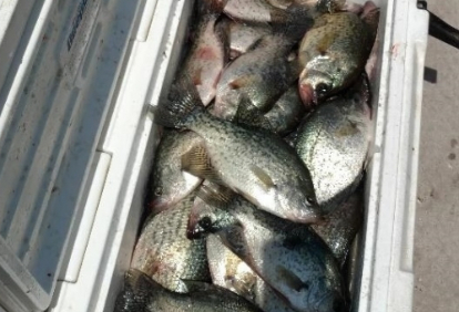 full-day-of-crappie-17634505931558498082