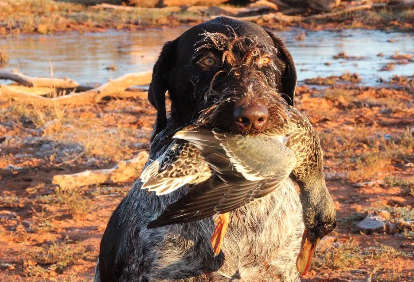 water-sheds-or-dry-field-duck-hunt-244483771556762760