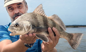 louisiana-redfish-1552852557_species_drum