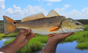 redfish being held by person fishing