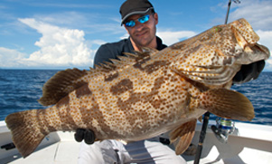 grouper-1552855411_species_grouper