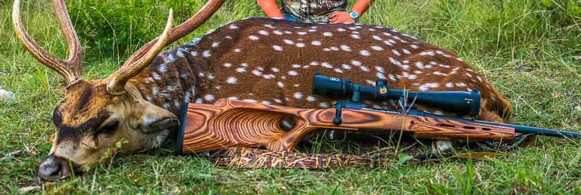 axis deer shot with rifle while axis deer hunting