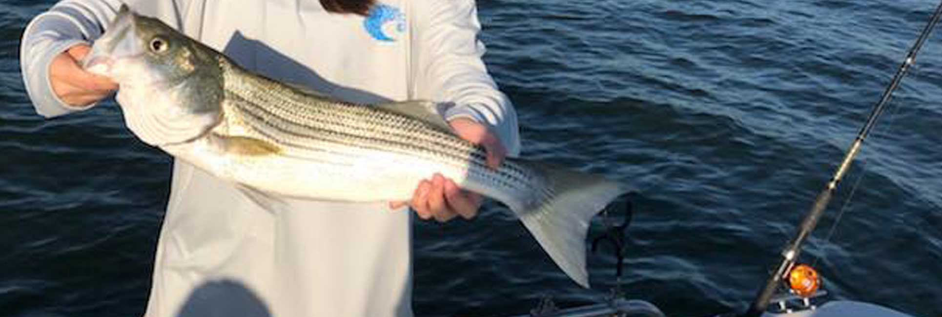 hybrid striped bass caught by people fishing