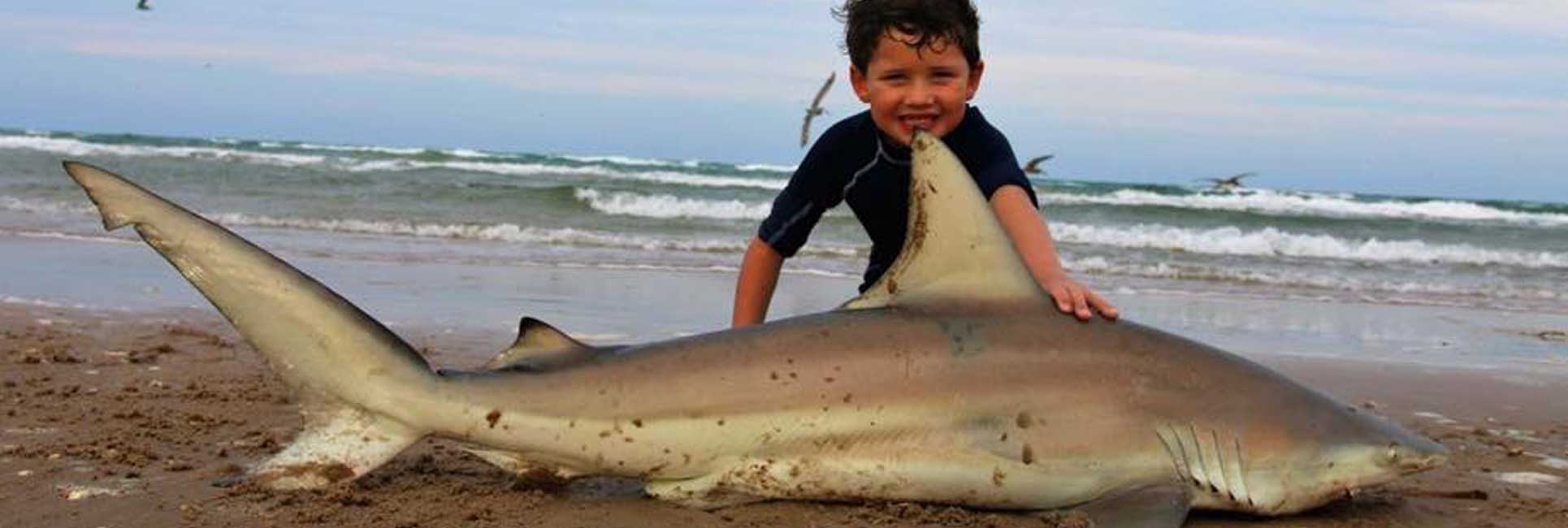 shark caught by fishing guide on beach with child